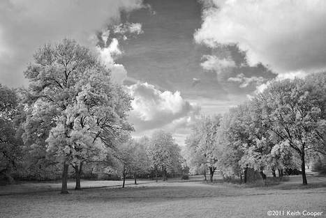 Digital Infrared photography with the Canon 5D mk2 Infrared conversion | Photography Gear News | Scoop.it