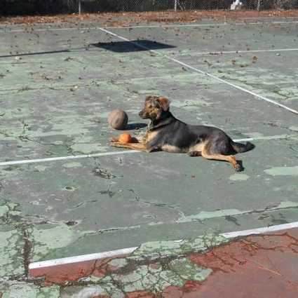 Uncanny Volley: 15 Abandoned Tennis Courts & Clubs | Modern Ruins, Decay and Urban Exploration | Scoop.it