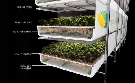 Say Hello To The (Soon To Be) World's Largest Indoor Vertical Farm - Modern Farmer | Benhil - Rooftop garden | Scoop.it