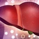 Scientists Grow Liver From Skin Cells: Light Of Hope For Liver-Failure Patients - The Almagest | LIVER HEALTH----IT'S MORE IMPORTANT THAN YOU KNOW-- | Scoop.it