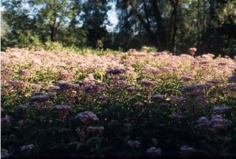 Top Honey Plants for Producing the Best Honey   enjoy yourself   Scoop.it