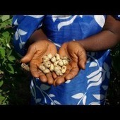 SATH and Twin Trade Sign MoU to Combat Aflatoxin in Groundnuts | Peanuts, bioactive superfood in a shell | Scoop.it