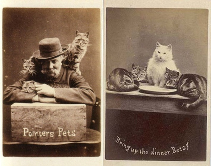 Unusual | A World Obsessed by Cat Pictures | Antiques & Vintage Collectibles | Scoop.it