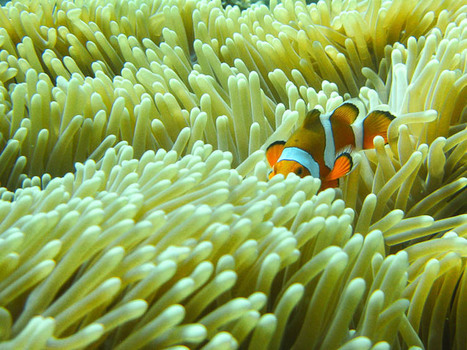 Bali Diving and the Economics of Happenstance | A Couple on the ... | Bali Heaven | Scoop.it