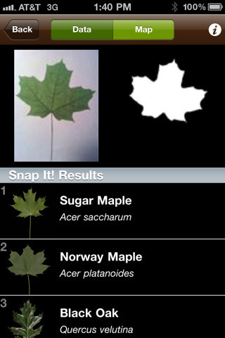 For The High-Tech Naturalist: LeafSnap Identifies Leaves Using Your iPhone's Camera | Innovative mobile services | Scoop.it