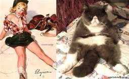Cats That Look Like Pin Up Girls   Pin Up   Scoop.it