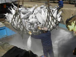 Ground-breaking illegal fishing accord soon to enter into force   Aquaculture Directory   Aquaculture Directory   Scoop.it