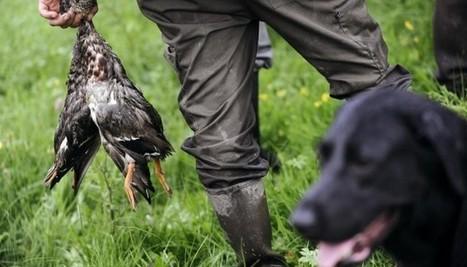 LES ANIMAUX SAUVAGES VOLONTAIREMENT OUBLIES DANS LE PROJET DE LOI BIODIVERSITE !   animaux   Scoop.it