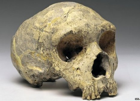Neanderthals 'could speak like us' | Science Bit Favourites | Scoop.it
