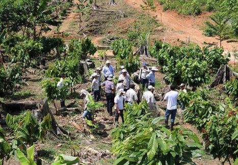 Perú, United Cacao deforestó parte de la Amazonía sin permisos | EFEverde | Scoop.it