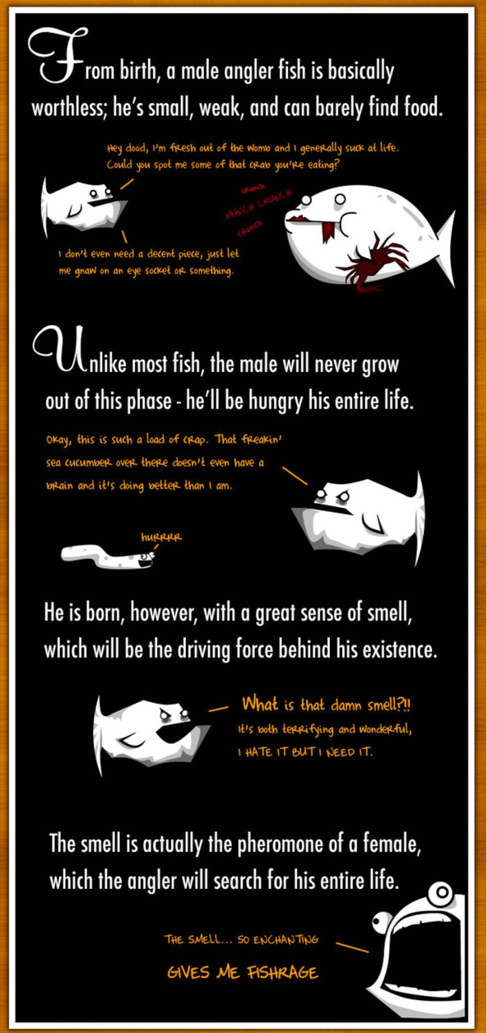 How The Male Angler Fish Gets Completely Screwed - The Oatmeal | Machinimania | Scoop.it