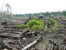 Le accuse alla Nutella: «Distrugge le foreste» | Dietro l'etichetta - ilCambiamento.it | Alimentazione consapevole - Autodifesa Alimentare | Scoop.it