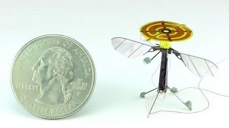 Robo-bee: miniature robot perches like an insect - BBC News | Robotics | Scoop.it