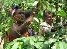 How Green Is Your Coffee? | Coffee News | Scoop.it