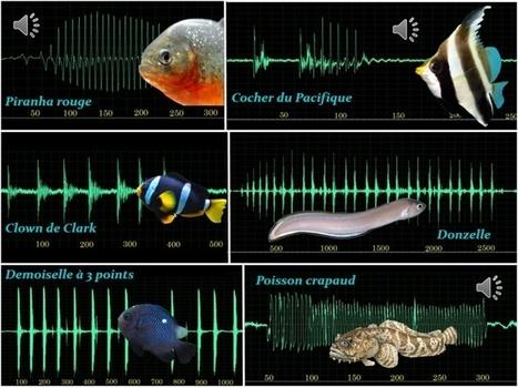 """Comment les poissons """"parlent"""" entre eux   Surprenante vie sous-marine   Scoop.it"""