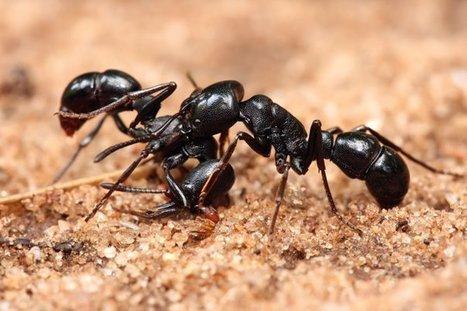 Las hormigas cambian el clima de la tierra | Bichos en Clase | Scoop.it