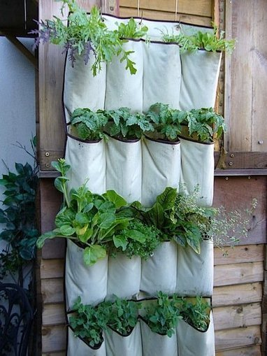 Look!  Using a Shoe Organizer for Container Gardening | Authors in Motion | Scoop.it