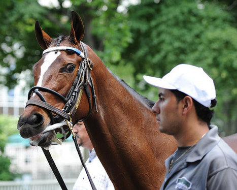 Lone Filly Against the Boys, Untapable Brings Beginners to Haskell Invitational | Horse Racing News | Scoop.it