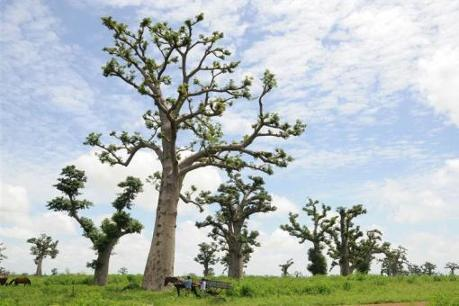 Senegal farmers fight desertification with trees - AlertNet | This Gives Me Hope | Scoop.it