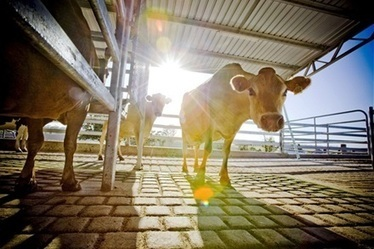 Competition for China's dairy market - Stock Journal | AS Micro | Scoop.it