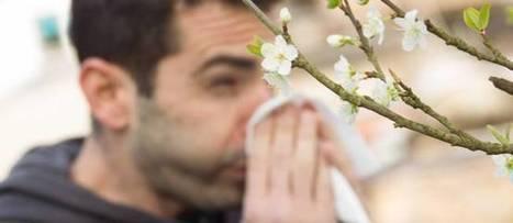 Des plantes contre les allergies saisonnières | Therapeutes-Magazine.com | Scoop.it