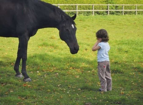 New research shows horses make people happy   Racing Future   Horses As Teachers   Scoop.it