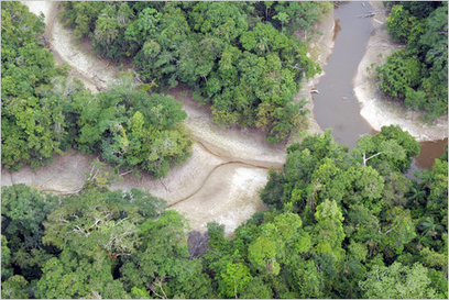 Drought in the Amazon, Up Close and Personal | Rainforest EXPLORER:  News & Notes | Scoop.it