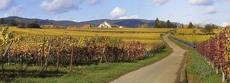 Nouvelles plantations de vignes: les cas particuliers   Vignes et vins   Scoop.it