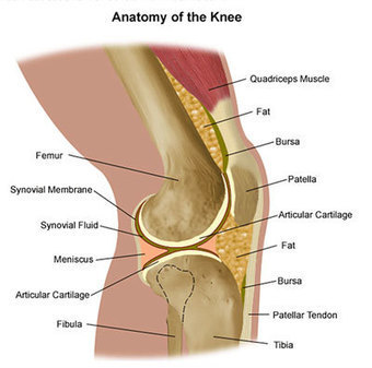 Knee Injury Specialist in Augusta GA | Georgia Clinic of Chiropractic Blog - Augusta GA | Health Conditions | Scoop.it