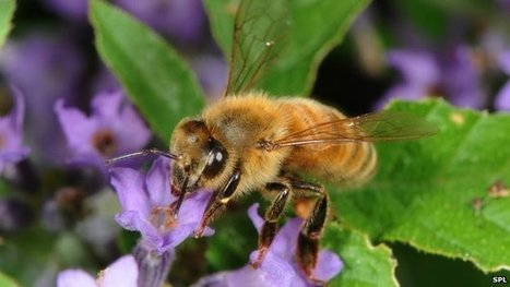 Flower planting to halt bee decline | Erba Volant - Applied Plant Science | Scoop.it
