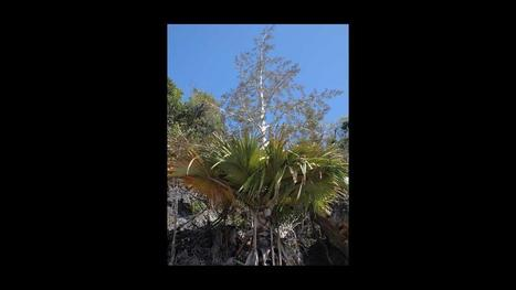 New genus of palms found in Madagascar | Communicating Science | Scoop.it