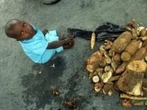 13 números chocantes do desperdício de comida no mundo   Reciclando com Sustentabilidade e Amor a Vida   Scoop.it