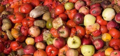 Conso : La mobilisation contre le gaspillage alimentaire   Developpement Durable   Gaspillage Alimentaire   Scoop.it