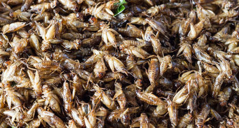 Crickets Aren't the Superfood They're Cracked Up to Be | Entomophagy: Edible Insects and the Future of Food | Scoop.it