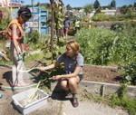 Berkeley schools' edible program faces challenges - Berkeleyside   Wellington Aquaponics   Scoop.it