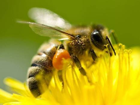 New pesticides linked to bee population collapse   Sustain Our Earth   Scoop.it