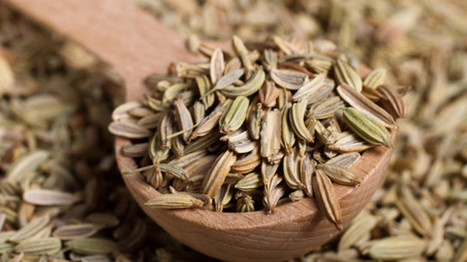 Fennel supplements – why do Europeans take them and are they safe? | Erba Volant - Applied Plant Science | Scoop.it