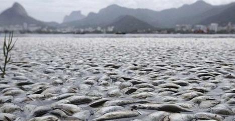 Contaminación en agua de Brasil alcanza nivel alarmante | GESTION AMBIENTAL | Scoop.it