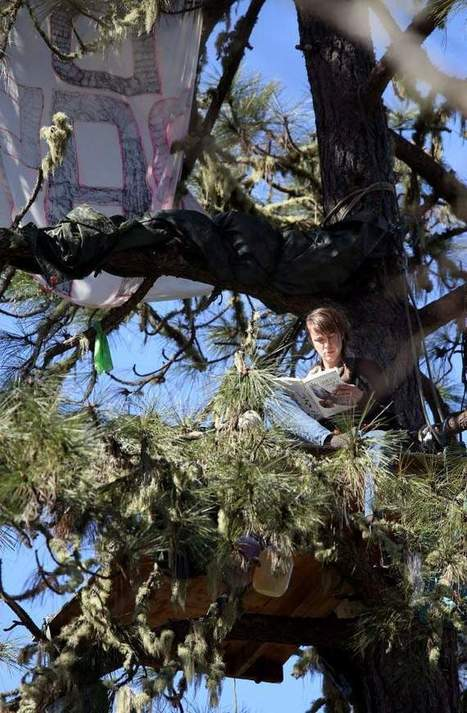 CHP, Caltrans block food, water deliveries to Willits tree sitters | Mendocino County Living | Scoop.it