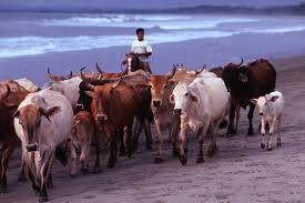Typical crops/ agriculture in Ecuador | Ecuador, Devin Elder | Scoop.it