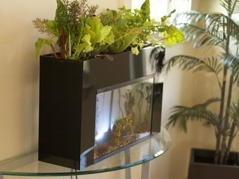 Student-designed kit turns 10 gallon aquariums into aquaponic gardens | aquaponic | Scoop.it