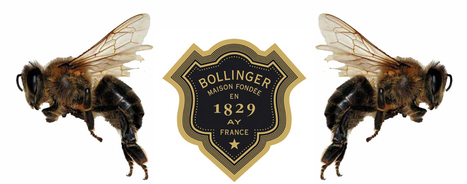 Why Bollinger is the Bee's Knees | Mornington peninsula | Scoop.it