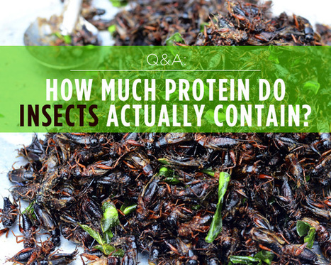 Q&A: How Much Protein Do Insects ACTUALLY Contain? | Entomophagy: Edible Insects and the Future of Food | Scoop.it