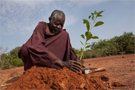 Yacouba Sawadogo - The Man Who Stopped the Desert | Oddity Central - Collecting Oddities | Recycling News Channel | OrganicStream.org | Scoop.it