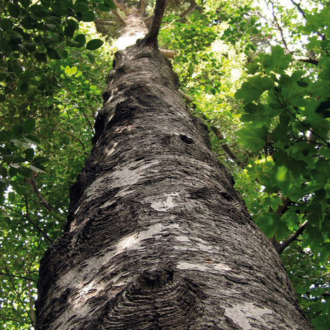 El Ayuntamiento incluye en la web municipal una sección dedicada a los árboles de Valladolid | Actualidad forestal cerca de ti | Scoop.it