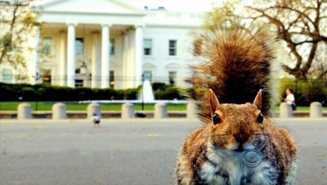 White House Squirrel Attack! Late-Night Comedy Roundup | Digital-News on Scoop.it today | Scoop.it