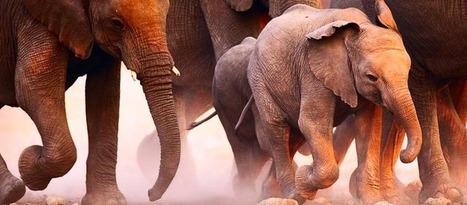 Littératures d'Afrique : Livraison hivernale | Opoto (Blog) | Kiosque du monde : Afrique | Scoop.it