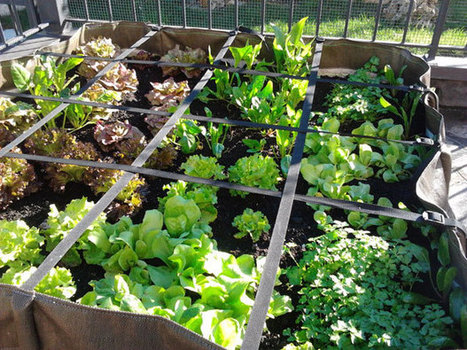 39 decrescita 39 in orto giardino frutteto piante - L orto in giardino ...