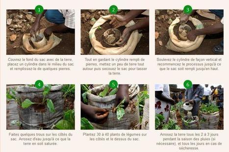 Un sac potager pour aider les habitants des bidonvilles à se nourrir | Right to water and Sanitation | Scoop.it