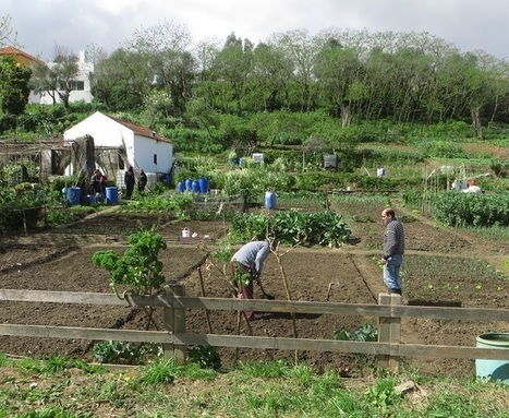A Lisbonne, les parcs deviennent des potagers urbains | Sustainable imagination | Scoop.it